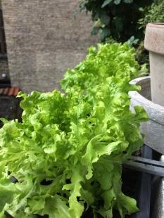 Salat fra altanen